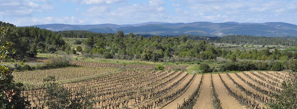 Vineyard near Laure